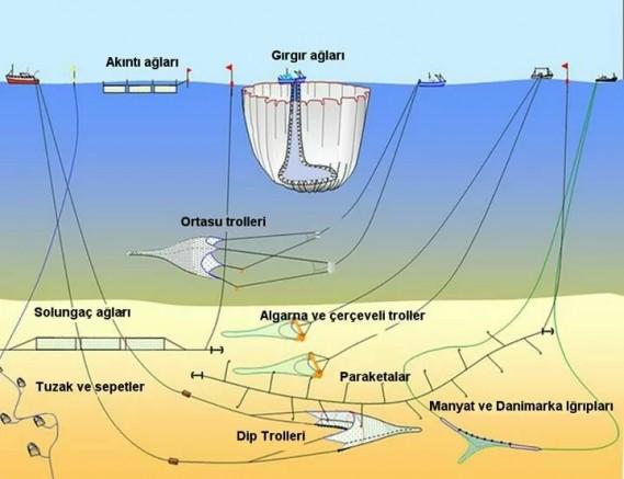 Marmara Denizi ekosistemine gırgır tehlikesi